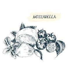 Mozzarella vector