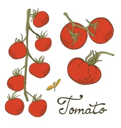 Colorful hand drawn set of tomatoes vector