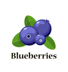 cartoon blueberries with leaves isolated vector image vector image