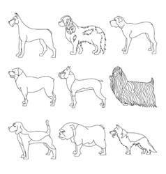 Set of purebred dogs in linear style vector