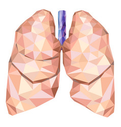 Human lungs in low poly with trachea vector