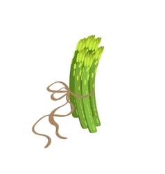 Asparagus product rich in folic acid vector