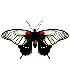 Color butterfly papilio lowi vector