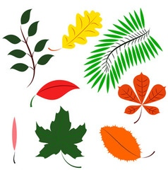 Colored different leaves vector