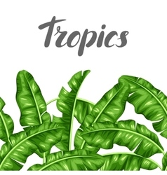 Seamless border with banana leaves image of vector