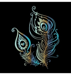 Beautiful peacock feathers vector