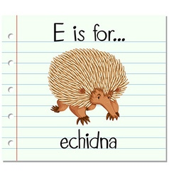 Flashcard letter E is for echidna vector image