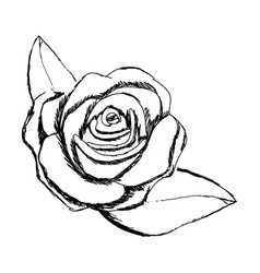 Monochrome sketch of rose flower with leaves vector