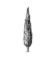 Cypress vector