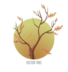 Isolated oak tree with falling leaves vector