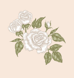 White rose flowers and leaves in vintage style vector