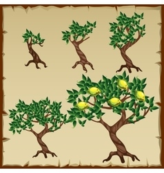 Five icons growth stages of lemon tree vector