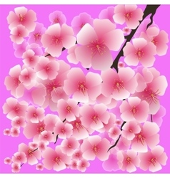 Spring pink flowers isolated on pink background vector