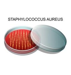 Staphylococcus aureusv vector