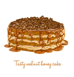 tasty walnut honey cake vector image