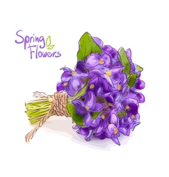 Small bouquet with meadow violets vector
