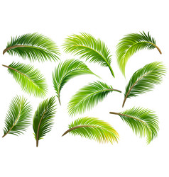 Palm leaves isolated vector