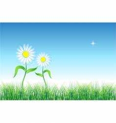 Chamomile on green field vector