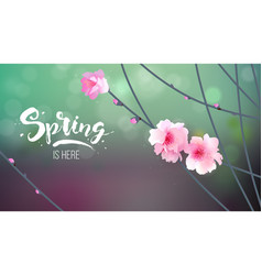 branch with blooming flowers vector image vector image