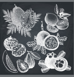 Hand drawn tropical fruits collection vector