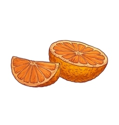 Juicy orange on a white background vector image