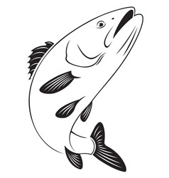 sea bass vector image