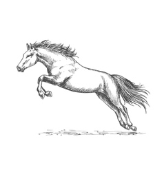 Race horse jumping high vector image