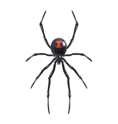 Realistic spider isolated vector image