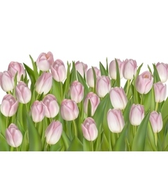 Tulip Flowers Isolated on White EPS 10 vector image