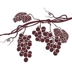 monochrome of the vine on a white background vector image