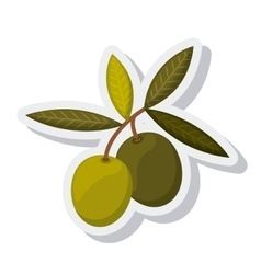 olive oil grains isolated icon vector image