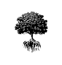 trees and roots silhouette vector image