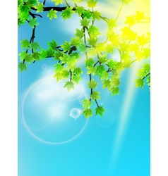 Sun beams and green leaves vector