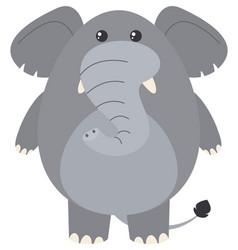 Gray elephant on white background vector