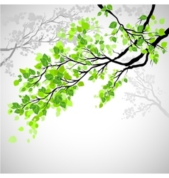 Branch with leaves vector image