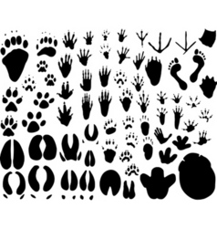 animal tracks vector image