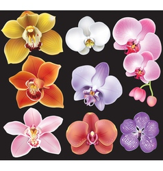 Collection of orchid flower vector