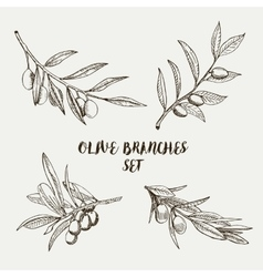 Graphic olive branches set vector