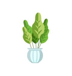 Herbaceous house plant indoor flower in pot vector