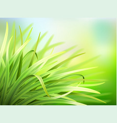 Spring background with fresh green grass vector