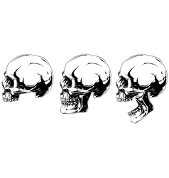 White human skull in profile projection set vector