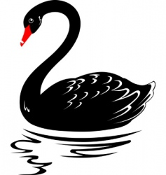 blackswan vector image