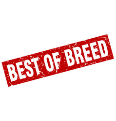 Square grunge red best of breed stamp vector