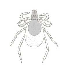 Tick mite insect vector