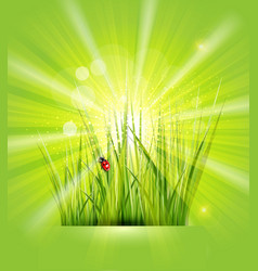 Spring background with green grass sunshine and a vector