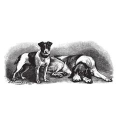 Fox terrier and fox hound vintage vector