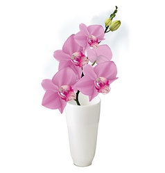 Orchid branch with buds in white vase vector image vector image