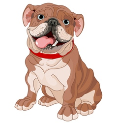 English bulldog vector