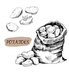 Potatos vector