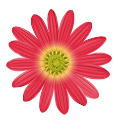 A pink sunflower vector